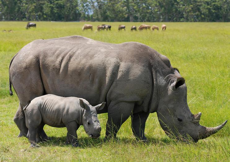 kenya safari trips
