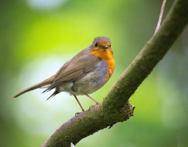 birding in Kenya